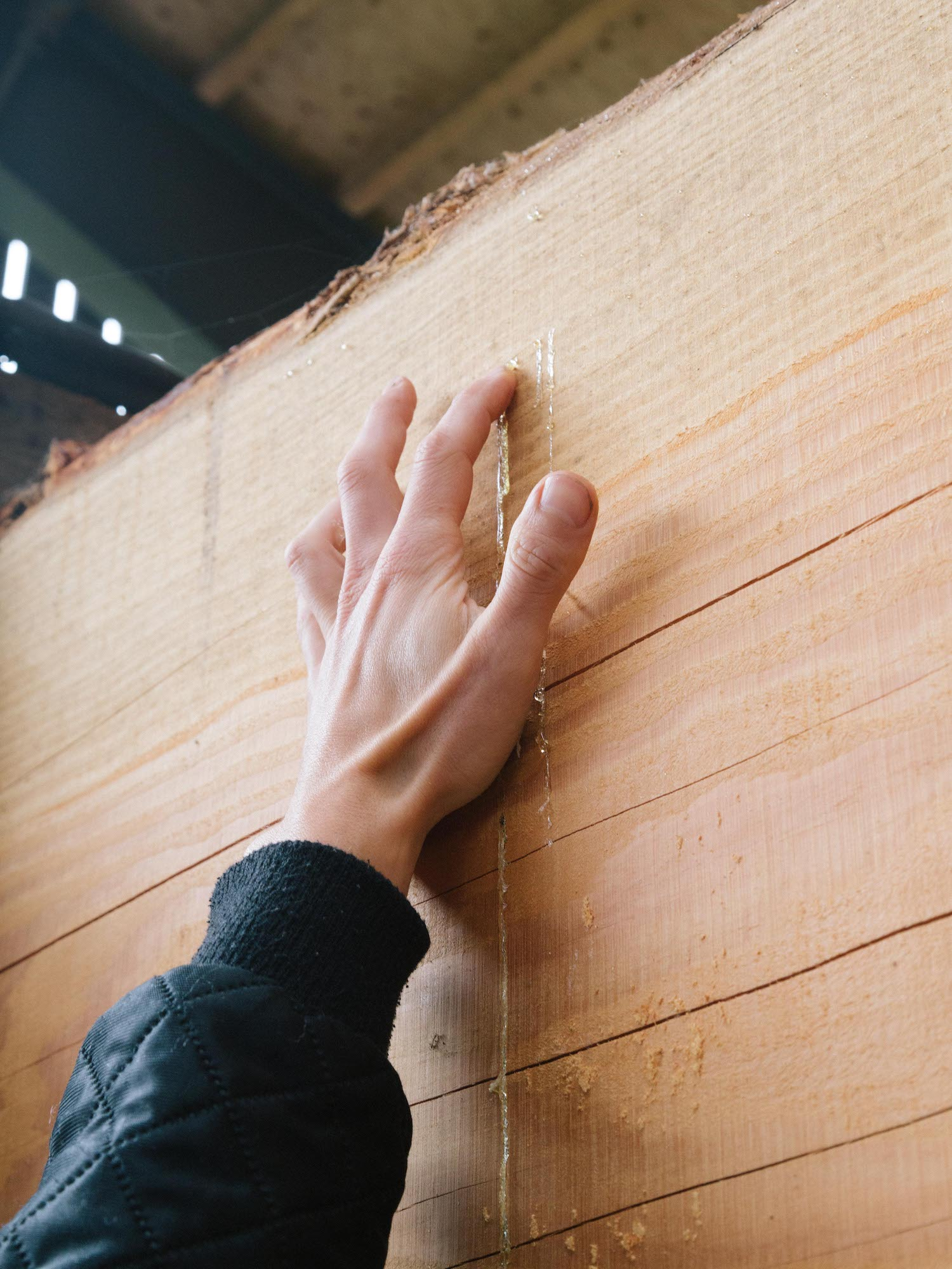 Design Studies member touching wood, photo by Ekstra